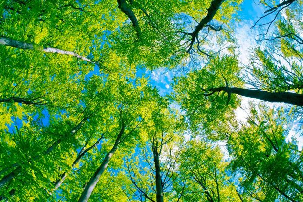 bravo_green